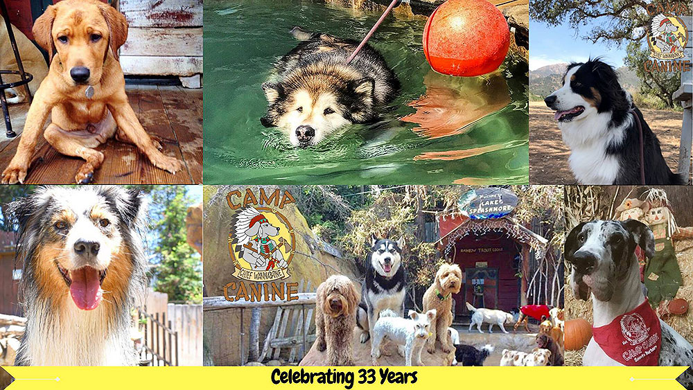 33 Years of Camp Canine Santa Barbara