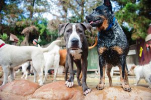 Camp Canine Santa Barbara