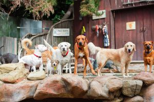 Camp Canine Santa Barbara