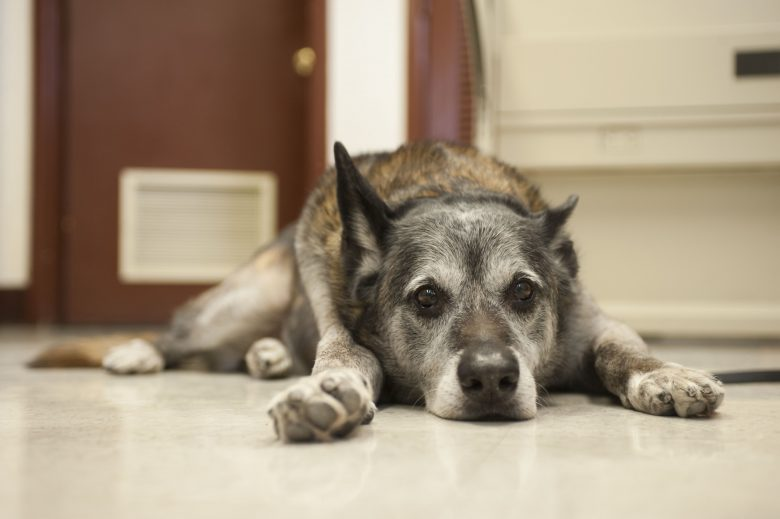 How To Heal Cracked Paws On A Dog Camp Canine